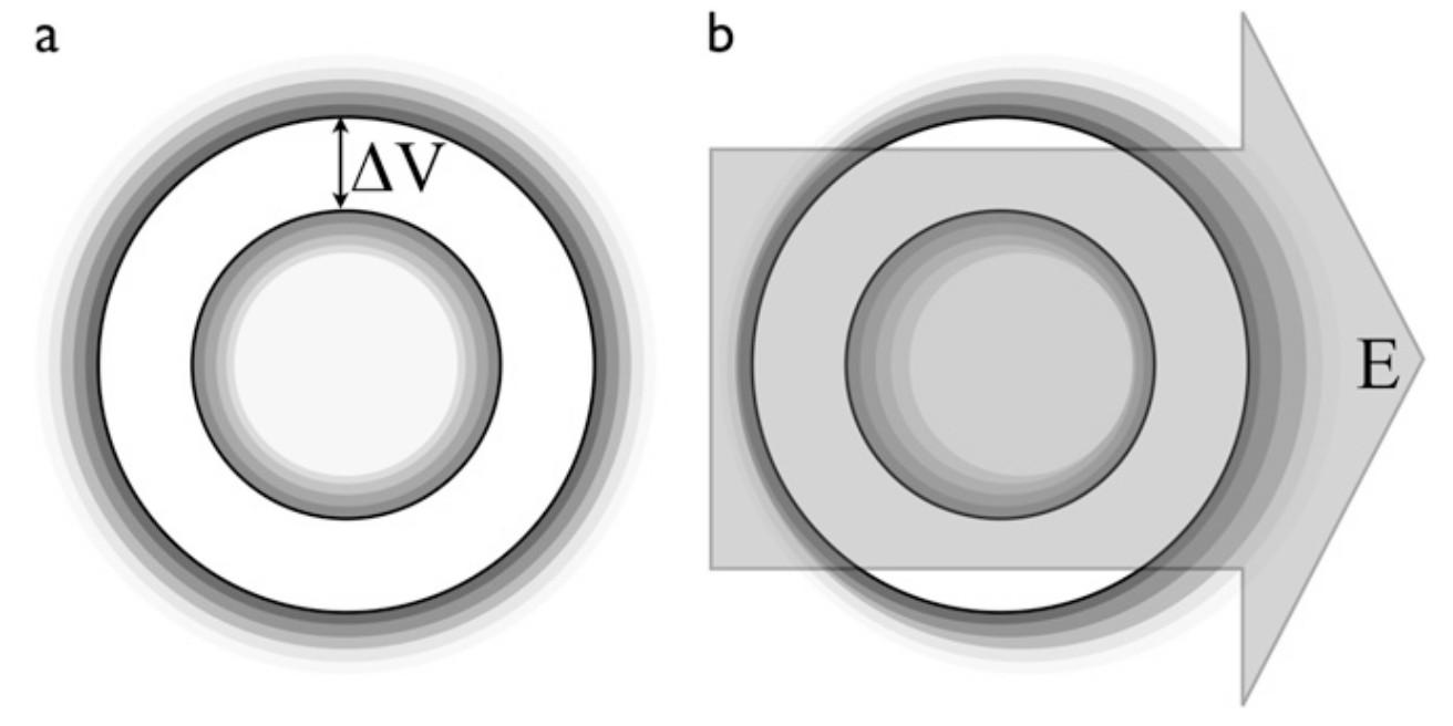 Lebende Zelle als geladene Kugelfläche ohne und mit äußerrem elektrischen Feld.