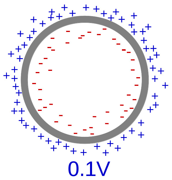 Zellmembran mit Ladung und 0.1 mV Membranpotential